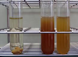 蛋白質の分解能力試験